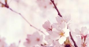 japanflowers